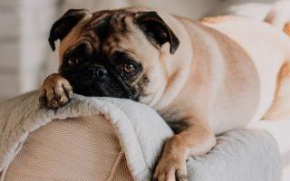 Все, что вам нужно знать об услугах кремации домашних животных