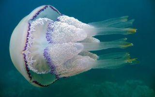 Что делать если обожгла медуза